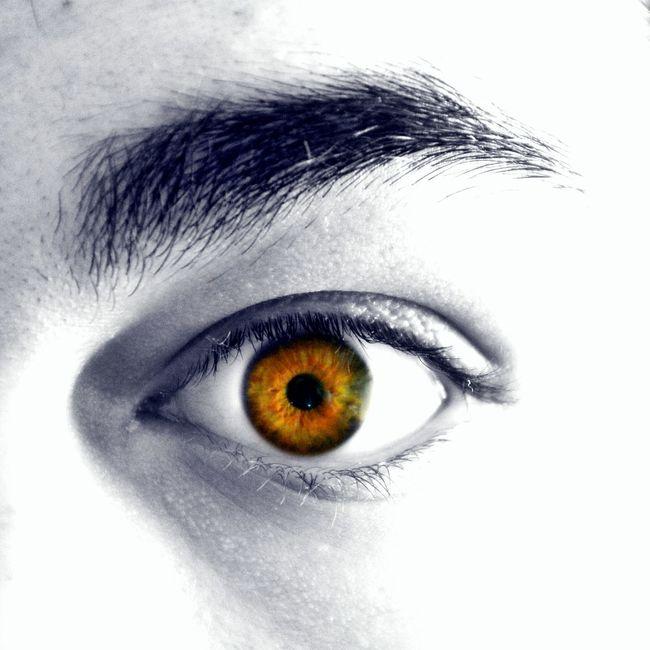 Eye Close-up Hazel Thick Eyebrow Male Colour Intriguing Artistic All Seeing Eye Green Macro Vibrant Round Iris Eyeemphoto