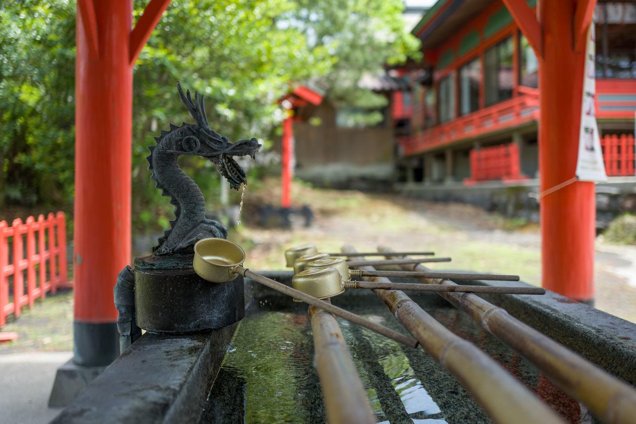 Photos from Sakurajima, Japan Animal Themes Bamboo - Material Close-up Day Japan KYUSHU Motion Nature No People Outdoors Water