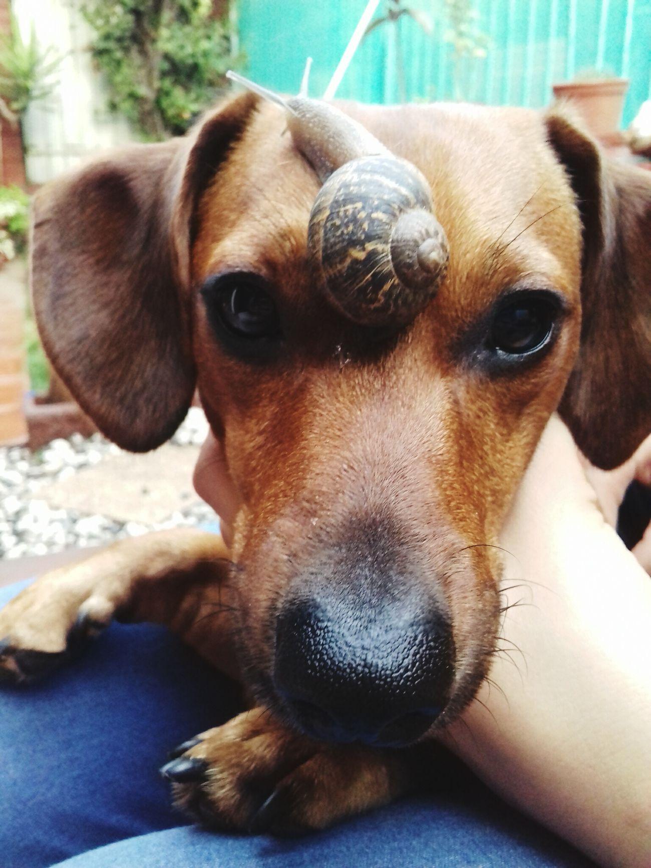 Dashchund Doglovers Dogloversofinstagram Vscocam Love First Eyeem Photo