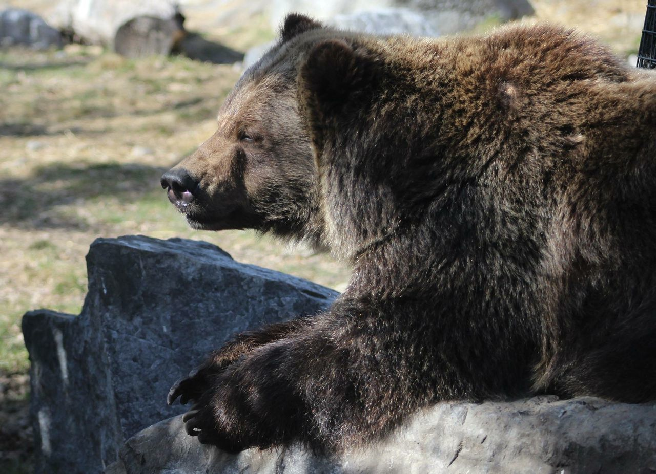 Beautiful stock photos of bear, Animal Themes, Animals In The Wild, Bear, Day