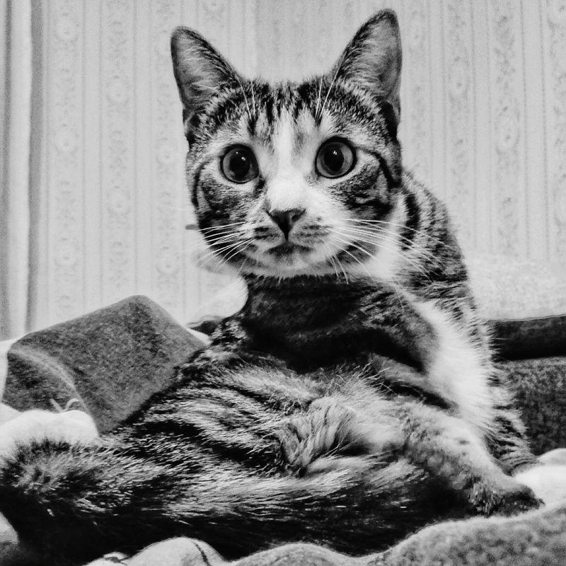 Cat Cats 🐱 Elsa♡ ArtWork Lovely Kitten Model Black & White Photo Spb_live Mysweetcat Fit Love Hi! Spb Purr Fatcat  Fatcats Girl Talking Pictures Shapes Cateyes Prayer Ladycat MyFavorite
