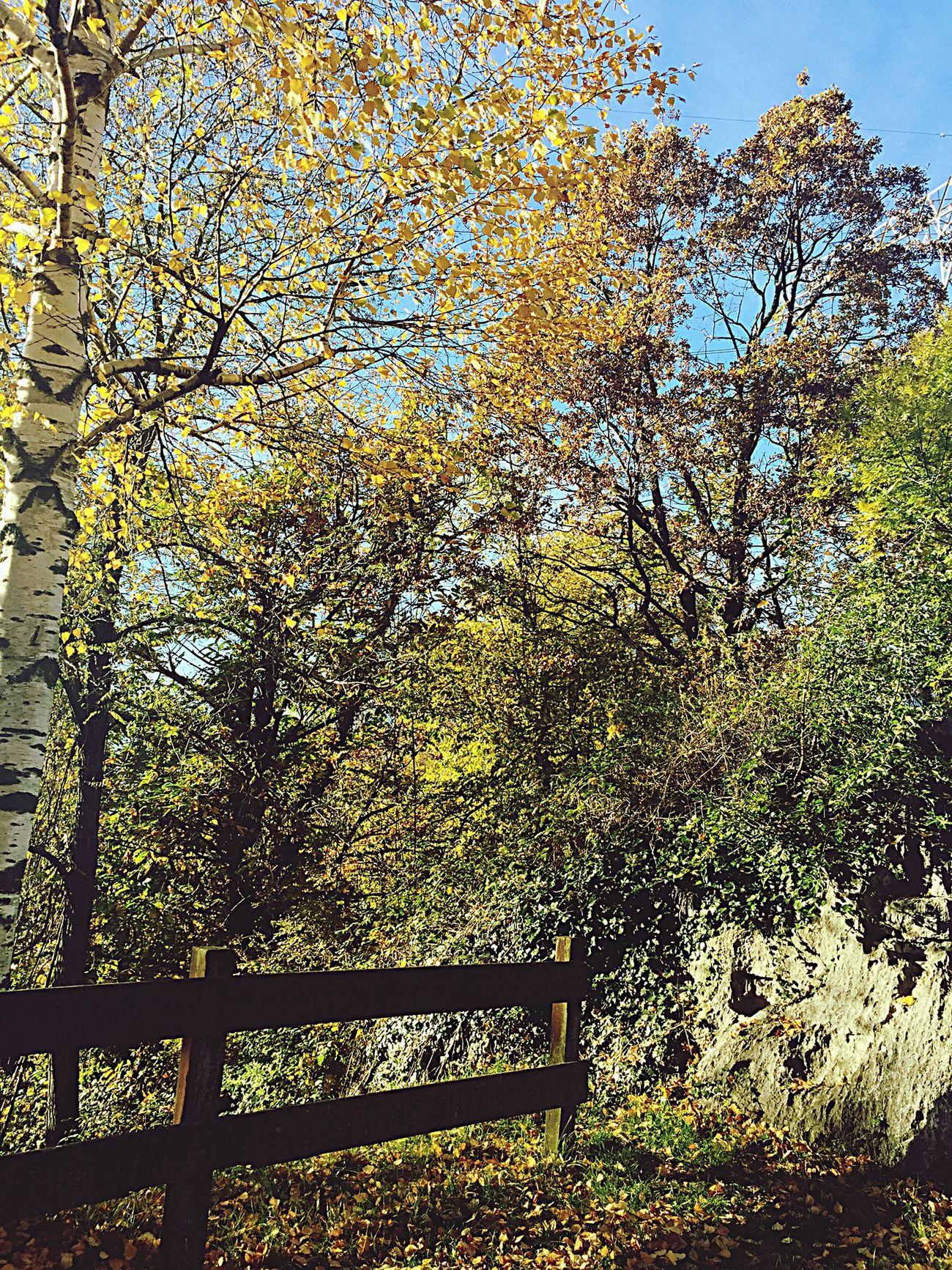 Hello World Autumn Autumn Colors