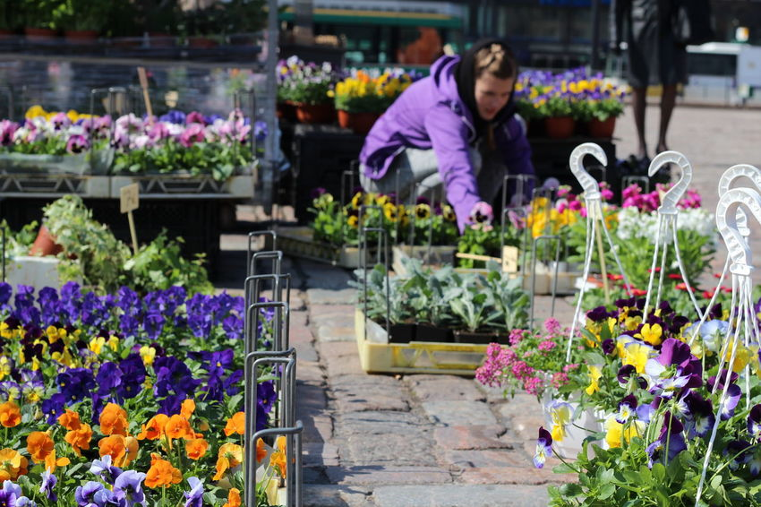 Pictures taken at Hakaniemi Market Hall, no editing, no touching. Abundance April 2016 Beauty In Nature Blooming FIN Finnish Spring Flower Flower Head Flower Shop Focus On Foreground Fragility Freshness The Shop Around The Corner Hakaniemen Kauppahalli Hakaniemi Hakaniemi Market Hall Hakaniemi Tori Helsinki Multi Colored Nature Petal Plant Purple Upclose Street Photography Spring Flowers