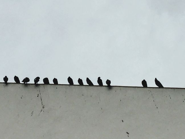 Birds LINE Built Structure No People Perching Pigeonslife Pigeons Pigeon Watching Lines&Design Lines And Shapes Exceptional Photographs Eye4photography  Minimalism