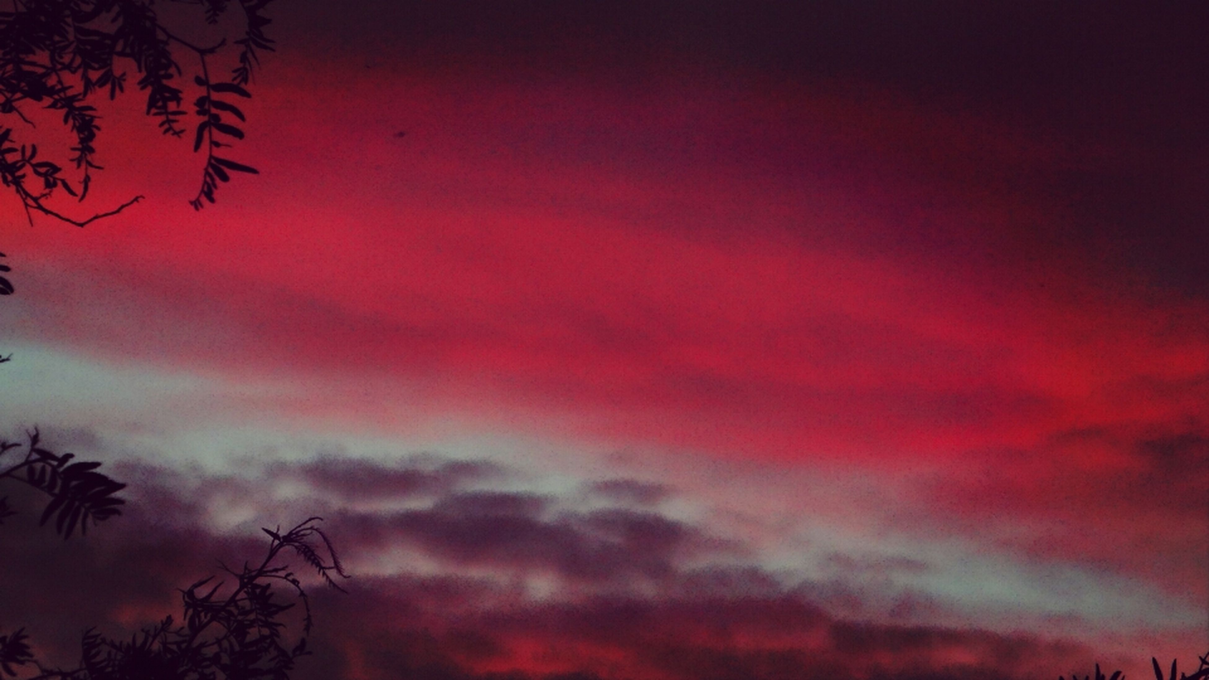 sky, sunset, low angle view, beauty in nature, tranquility, tree, silhouette, cloud - sky, scenics, nature, tranquil scene, orange color, red, cloudy, idyllic, dusk, dramatic sky, growth, overcast, cloud