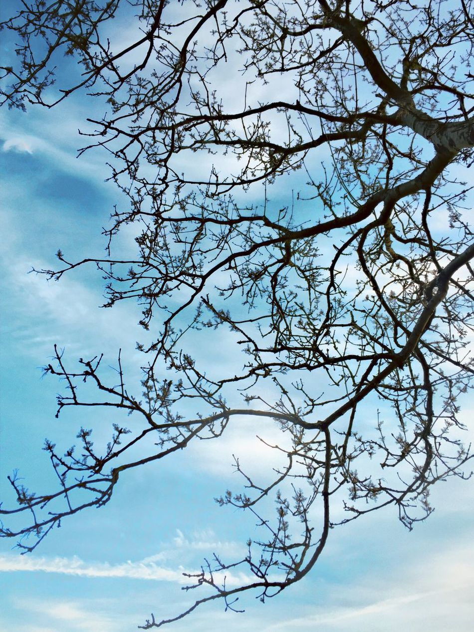 Tree Trees Tree And Sky Branch Branches Branches And Sky Sky IPhoneography Nature Nature_collection