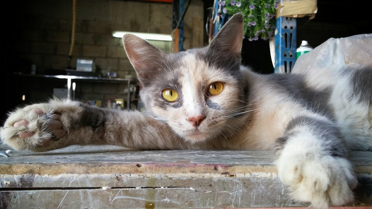 Cat Lying Down On Workshop Table