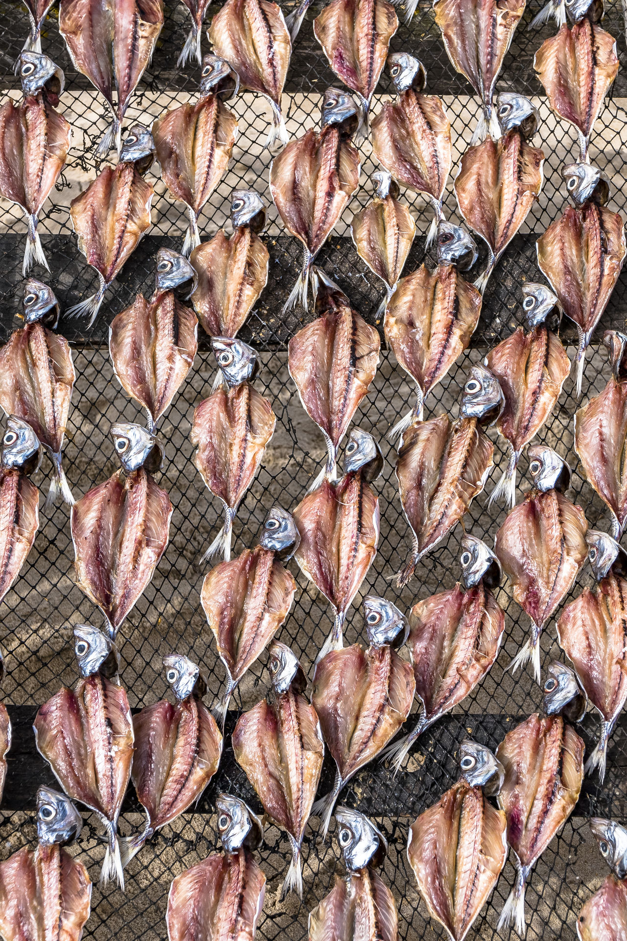 Dry fish in Nazaré Abundance Animal Themes Artesanal Backgrounds Beauty In Nature Close-up Day Dry Fish Escher Fish Fish Bones Fish Heads Full Frame Indoors  Large Group Of Animals Large Group Of Objects Nature No People Padron Pattern Portugal Repetion Sun Drying Fish Textured  Typical