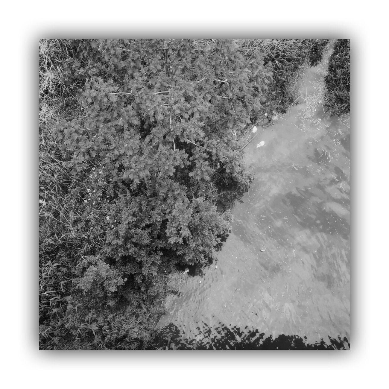 「川を橋の上から撮る」 I Took The Rivers From On The Bridge River Bridge Monochrome_life Blackandwhite Monochrome Light And Shadow