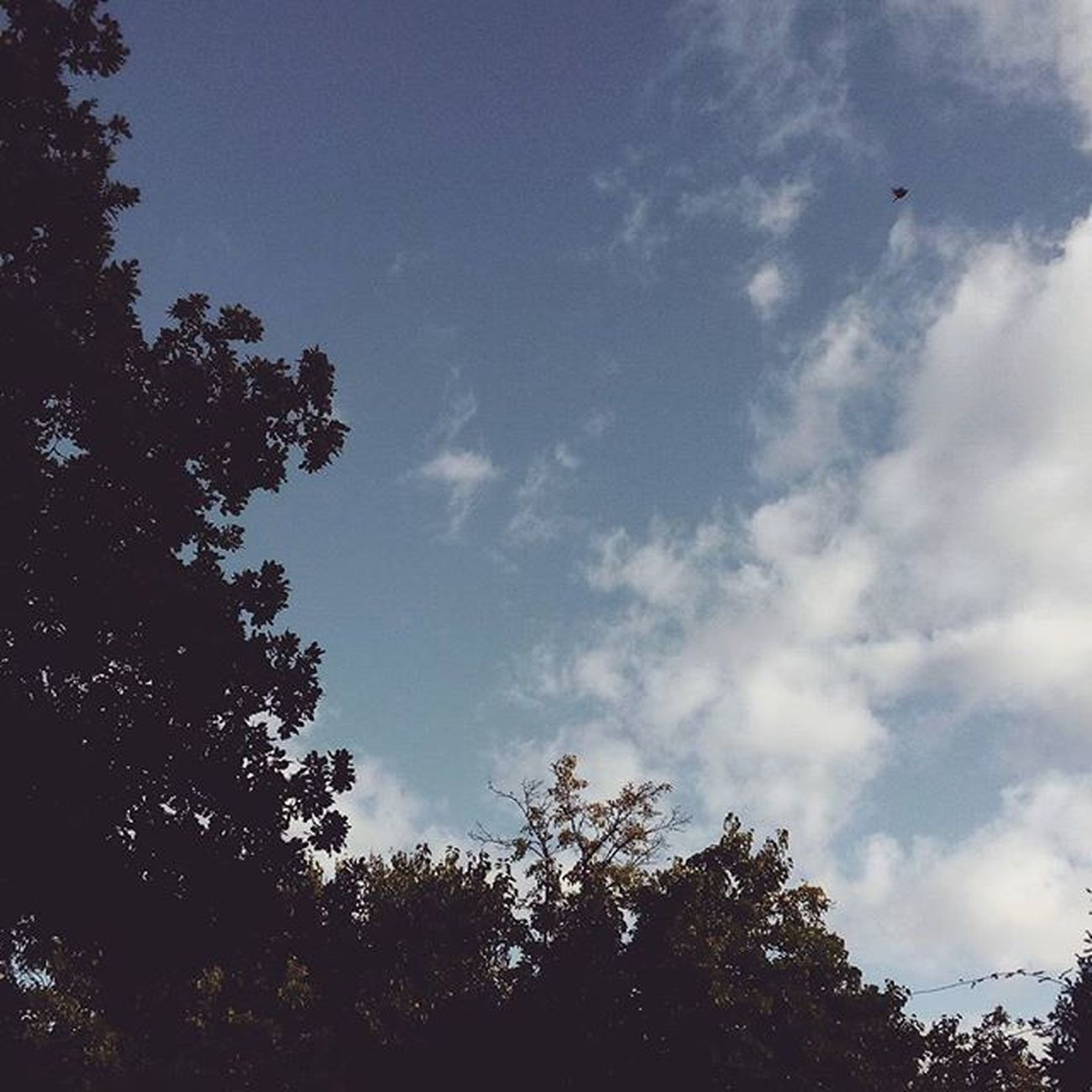 domenica ☀ Domenica Sunday Trees Leaf Leaves Sky SkyClouds Skylovers Nuvoleblurassegnati Clouds Cloudslovers Cloudscape Marche Italia Italy Igersmarche Igersitalia Liveloveitaly Cielo Cieloazzurro Autumn Autunno  Lategram Nature Naturelovers landscape
