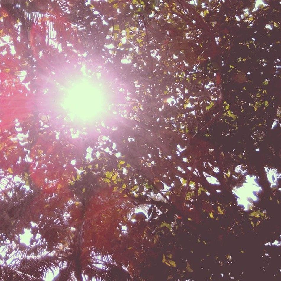 Dibawah Pohon Trees Nature