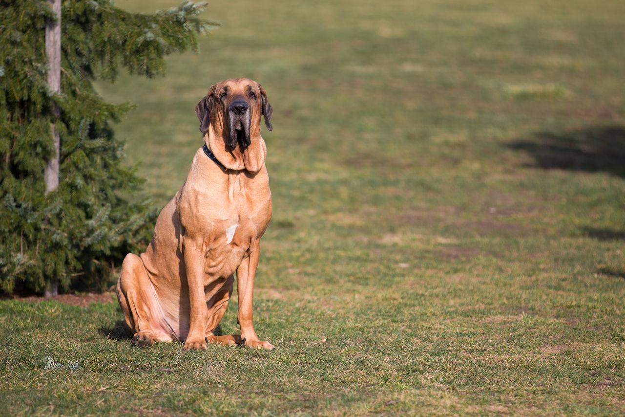 Animal Animal Themes Day Dog Domestic Animals Mammal No People One Animal Outdoors Pets