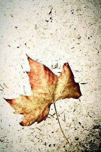 Nature Leaf Beauty Autumn Fall Enjoying Life Stand-alone