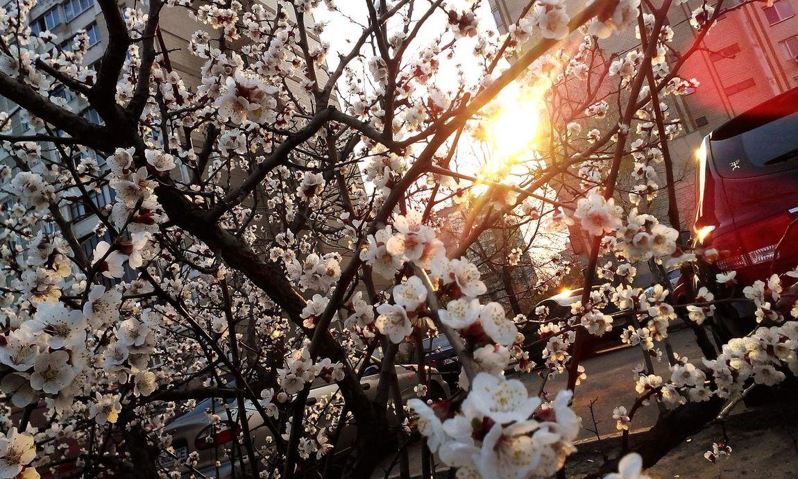 EyeEm Best Shots EyeEm Best Edits Flowers Flowerporn Nature Enjoying The Sun Silhouette Popular Photos Taking Photos Landscape