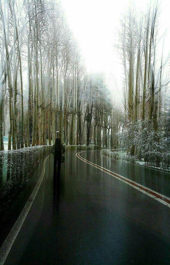 Snow Day Trees Alone Time Road Nikonphotography Winter Walk Iranian Garden EyeEm Best Shots EyeEm Nature Lover Tree Art