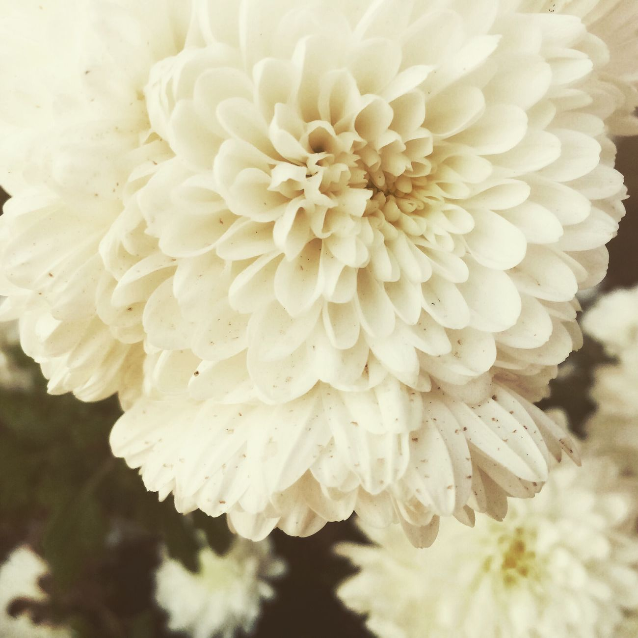 Mesmerizing White Beauty ! Flower Plants And Flowers