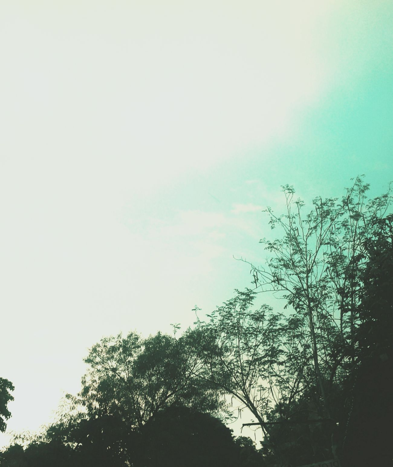 Trees And Sky Tree_collection  Sky And Clouds Dandelion Blues AVPhotography Ailapost Ayiingshots Calmness