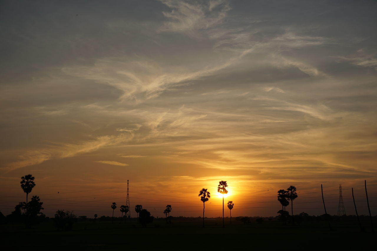 Sunset Silhouette Sky Nature Beauty In Nature Cloud - Sky Tree Thailand