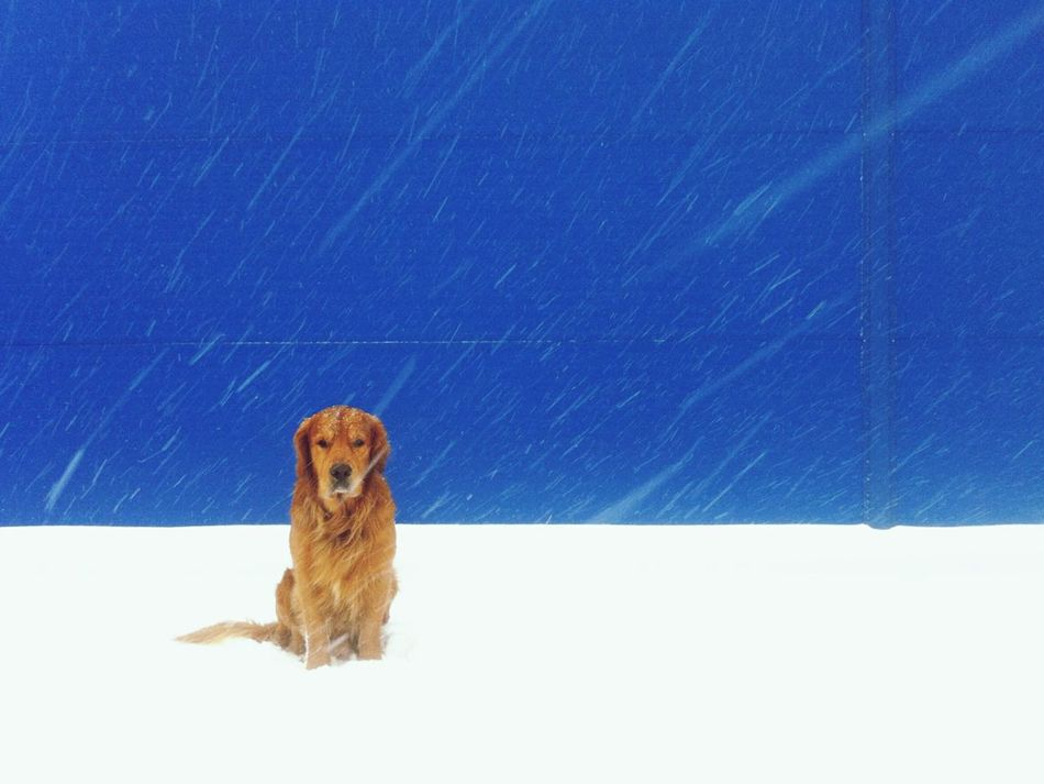 Beautiful stock photos of sad, Animal Themes, Blue, Clear Sky, Cold Temperature