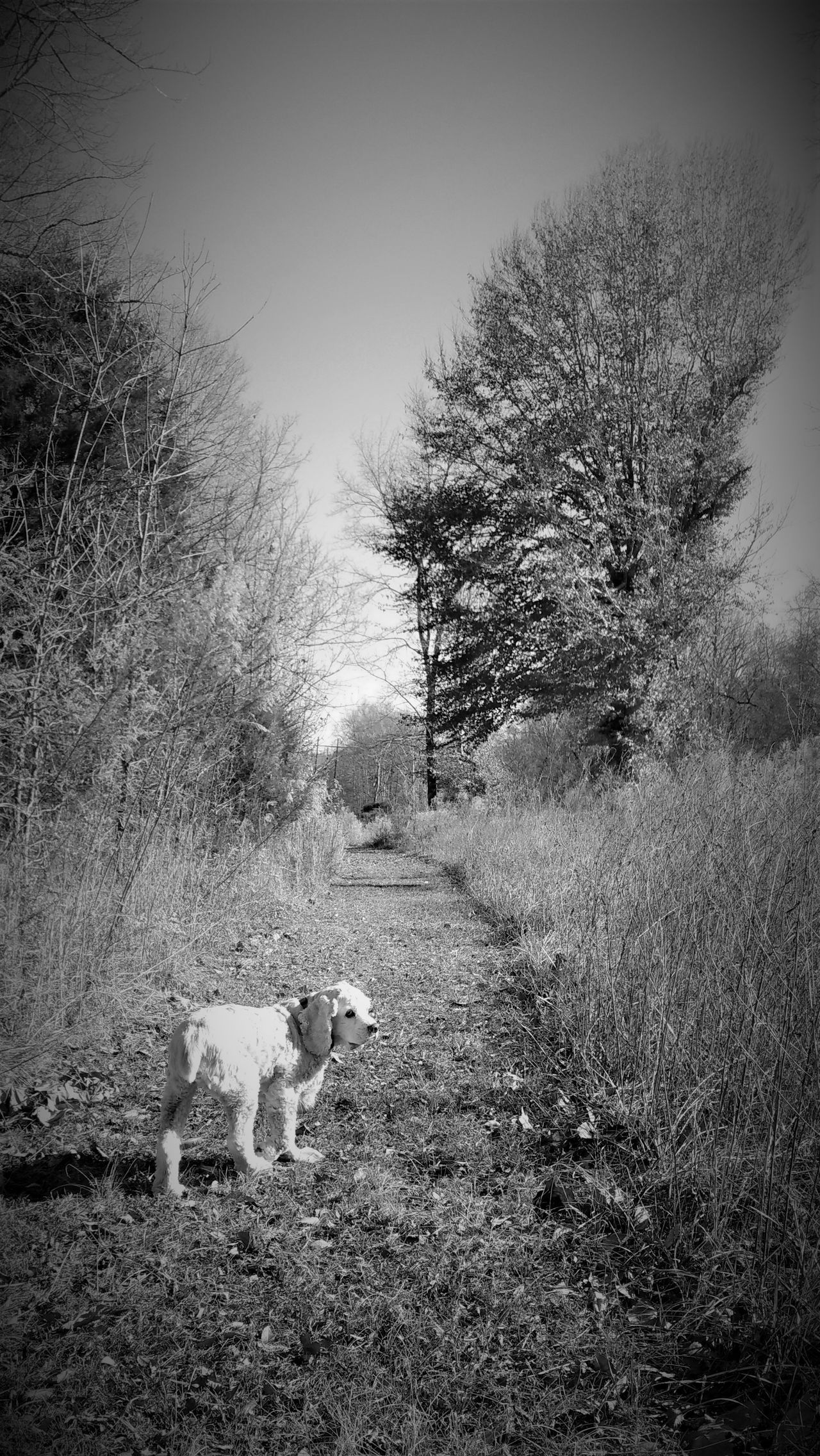 Animal Themes Autumn Of Life Blackandwhite Photography Cocker Spaniel  Come With Me Don't Leave Me End Of Life End Of Life... Fall Of Life Furry Friend Goodbye Happy Trails Invitation Journey Last Adventure Life Journey Long Walk Long Walk Home Lost Outdoors The End