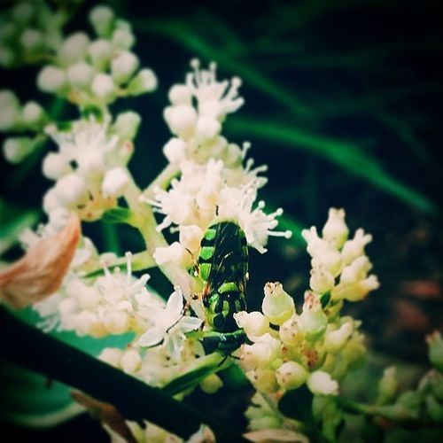 I'm not sure what this is Clueless Stillcool Green Insect flower vsco vscocam