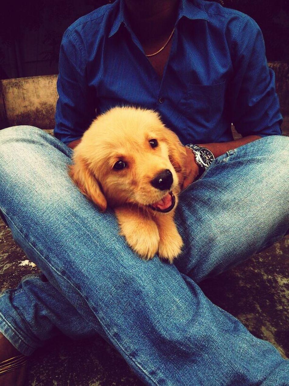 Pets Corner Lambo Mygoldendog Loadsoflove Smileplease