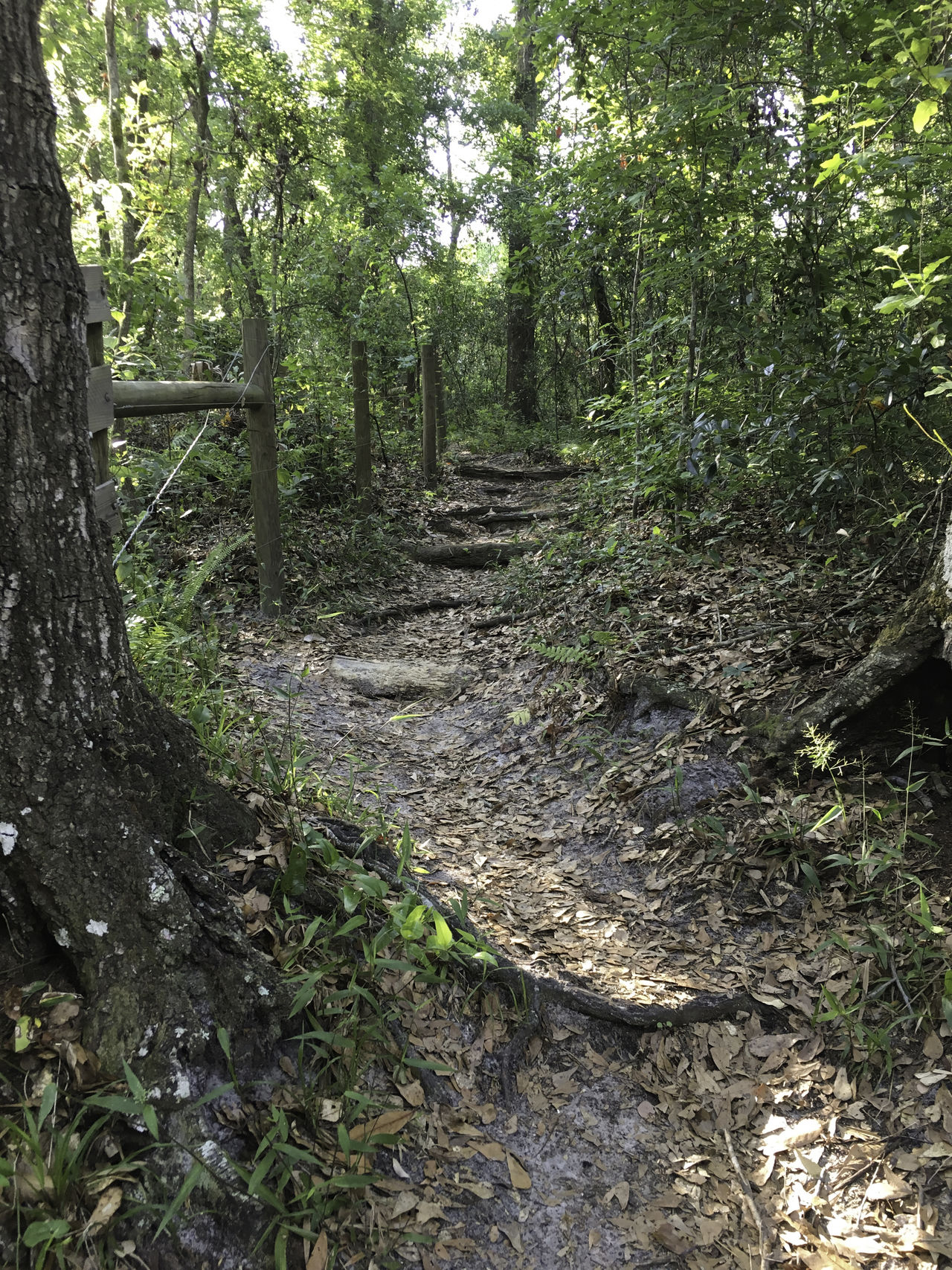 Scenic hiking trail Beauty In Nature Day Forest Growth Hiking Landscape Leaves Nature Outdoors Pattern Scenics Trail Tranquility Tree Tree Trunk