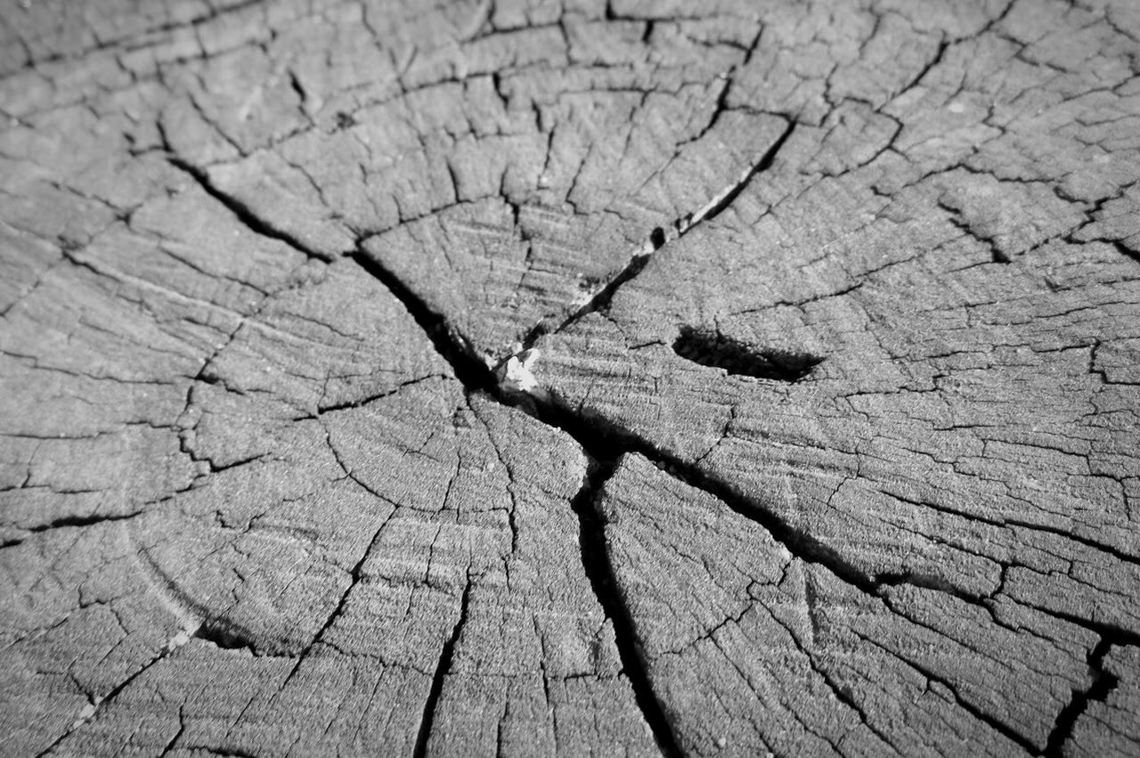 cracked, tree ring, tree stump, textured, wood - material, environmental issues, close-up, nature, day, environment, outdoors, deforestation, no people, backgrounds, full frame, tree