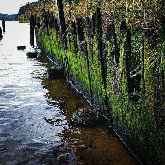 Halden Tyska Mosè Vann turNorway lovely colour beautiful water moss hike autumn fall høst