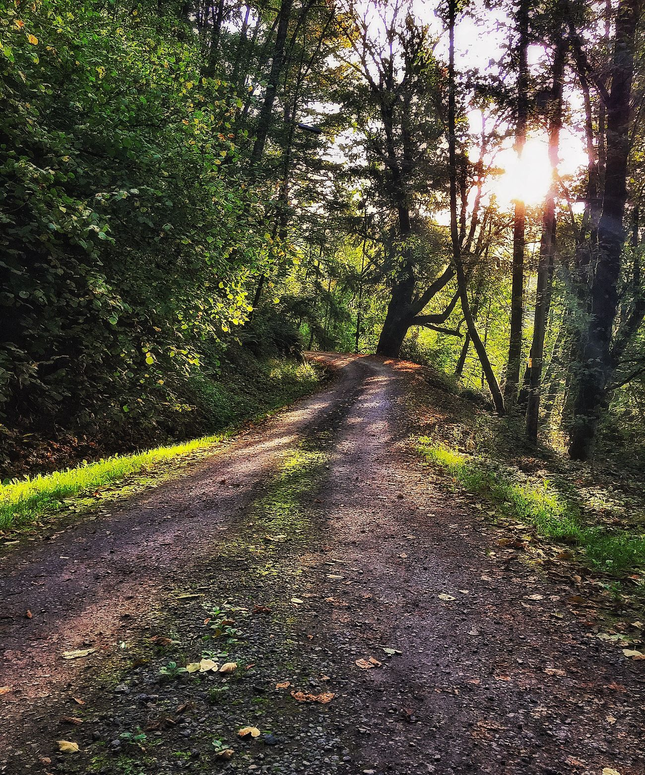 A color one Sunlight Tranquil Scene Sunbeam Dirt Road Road Sunny Day On The Way To Work Good Morning Beautyeverywhere Bright Simplicity Light And Shadow