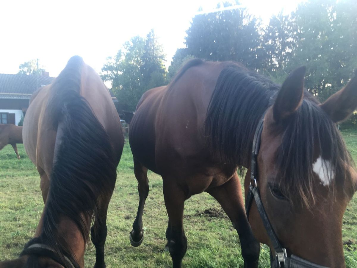 Horses Animal Themes Two Horses