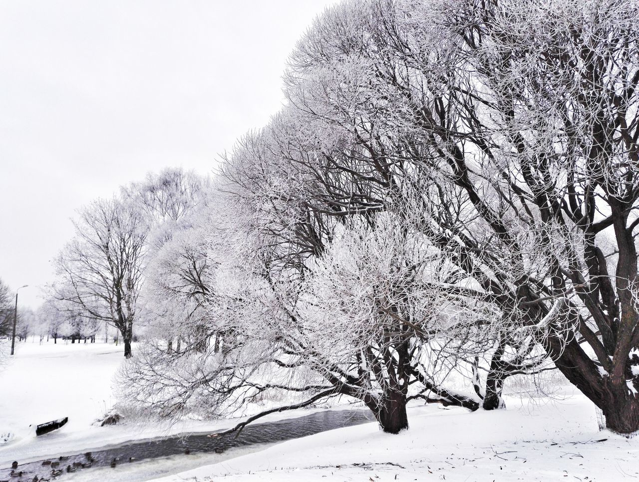 Snow Winter Cold Temperature Tree Nature Weather Cityscape Beauty In Nature Black And White City Enjoying Life Hello World Tranquility
