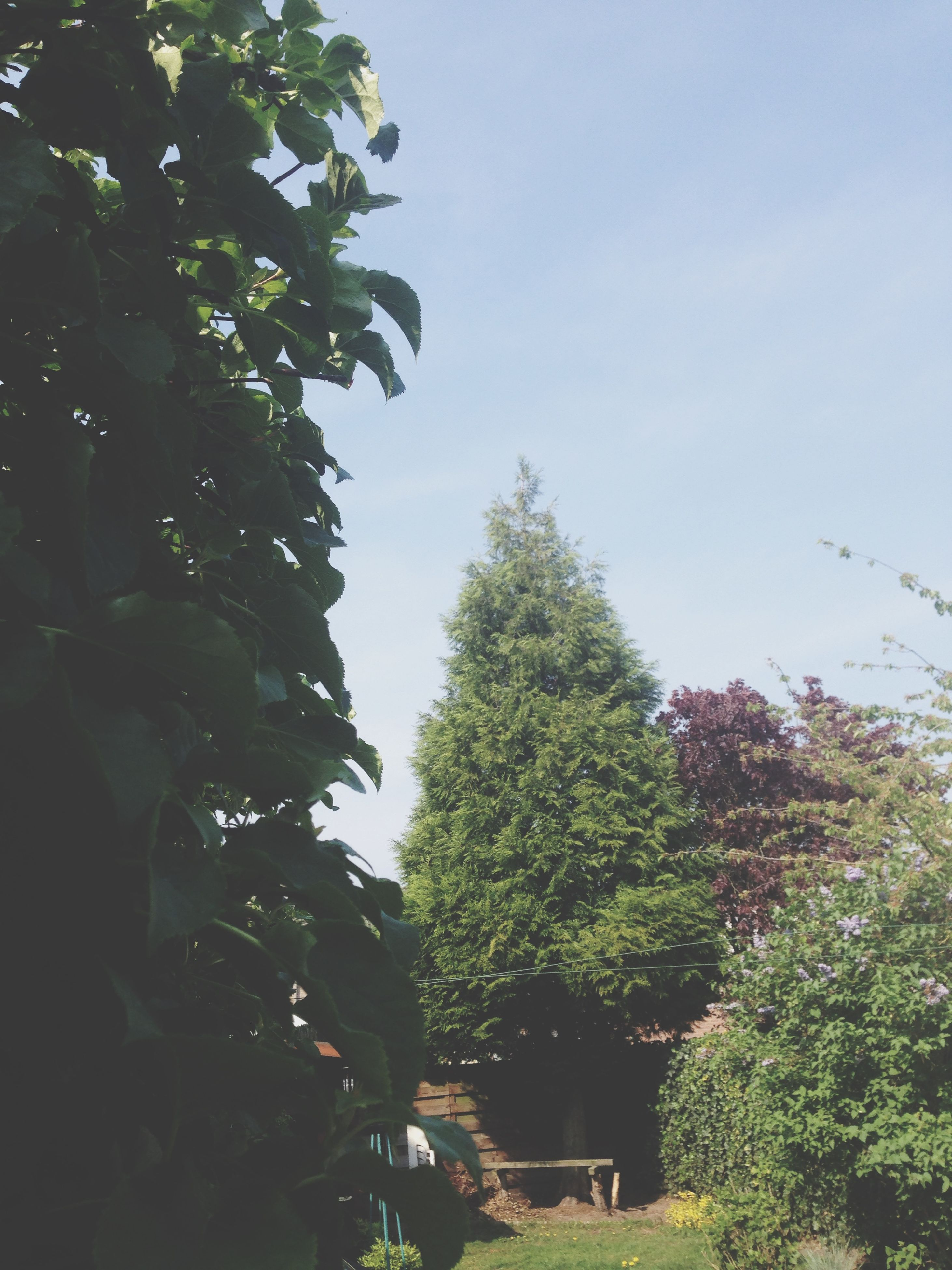 tree, clear sky, low angle view, growth, green color, leaf, branch, nature, copy space, sky, tranquility, plant, beauty in nature, day, outdoors, lush foliage, no people, built structure, green, building exterior