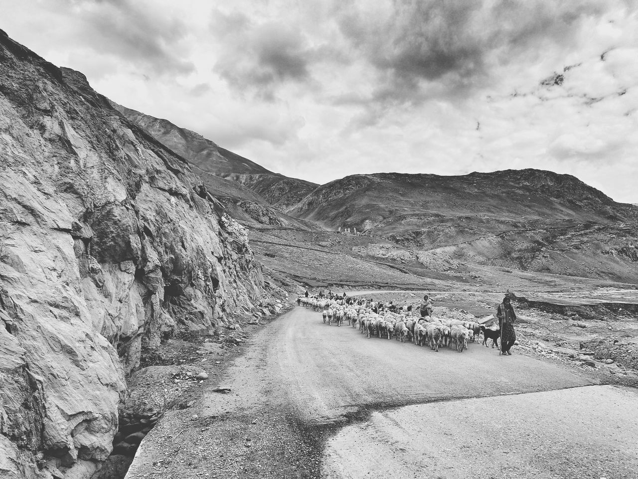 Shepard Shepards Of Ladakh Landscape Landscapes With WhiteWall Monochrome Sheep LehLadakh Leh Ladakh Remote Black & White EyeEm Indiaincredible India Black And White Collection