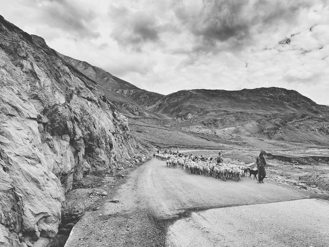 Shepard Shepards Of Ladakh Landscape Landscapes With WhiteWall Monochrome Sheep LehLadakh Leh Ladakh Remote Black & White EyeEm Indiaincredible India Black And White Collection
