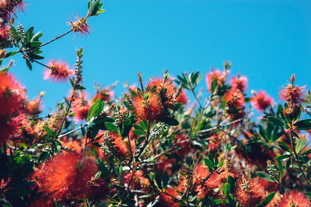Growth Nature Plant Day No People Outdoors Leaf Clear Sky Beauty In Nature Flower Blue Fragility Freshness Tree Close-up Sky Rural Poetry Beauty In Nature Nature Plant Bottlebrush Flower Copy Space