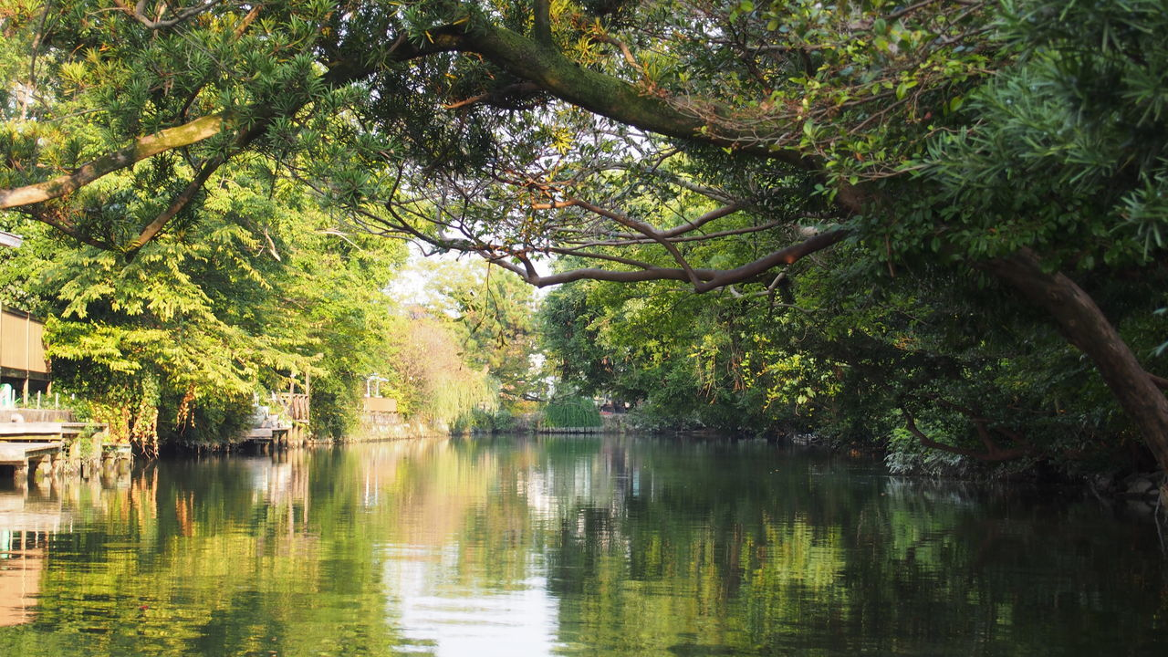 Beauty In Nature Boating Branch Calm Canal Day Green Color Growth Idyllic Lake Majestic Nature No People Outdoors Park - Man Made Space Plant Reflection Remote Scenics Tranquil Scene Tree Tree Trunk Water 川下り 柳川