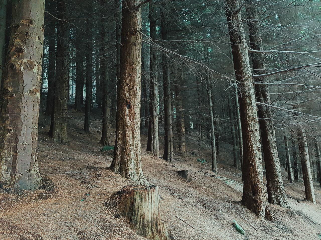 Forest Ireland Northernireland Ireland Countydown Castlewellan Castlewellan Forest Park Summer Trees Lonliness Quiet Dark Contrast Light Nature Deep