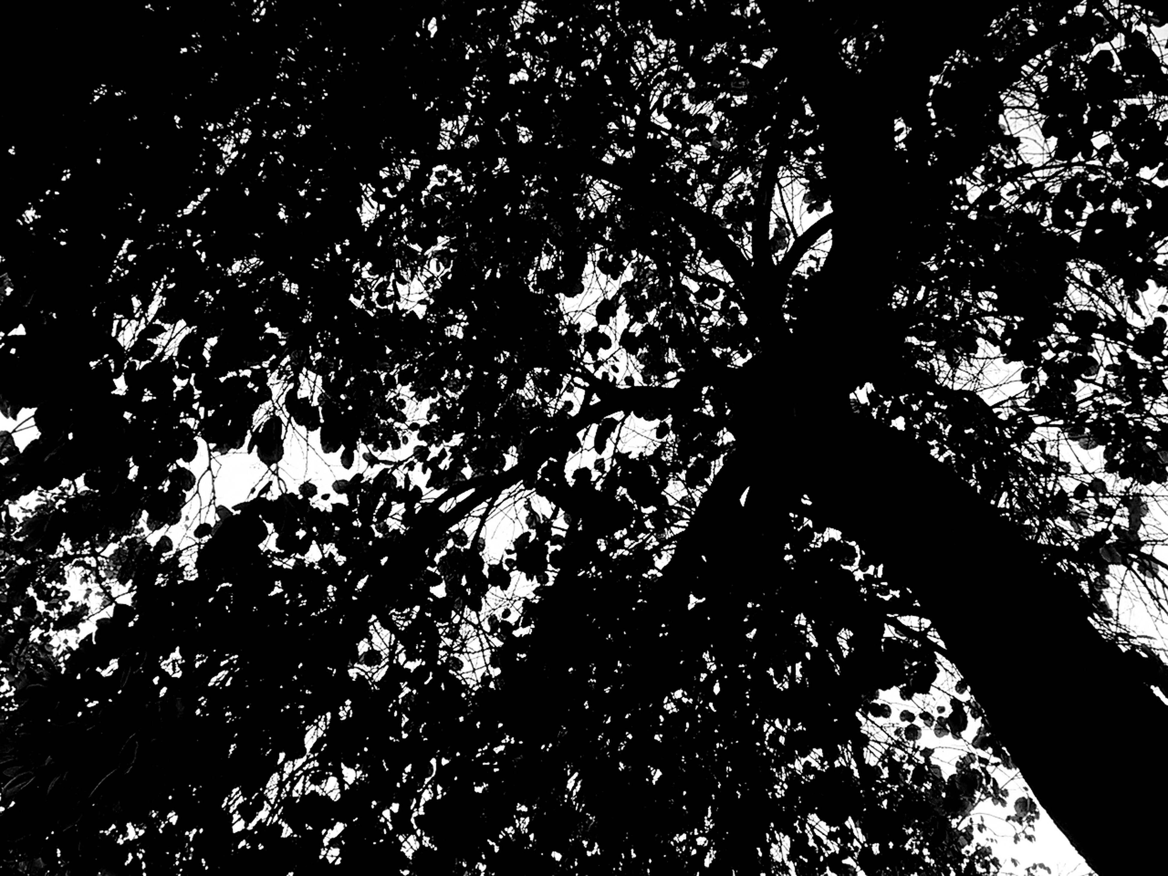no people, full frame, backgrounds, low angle view, nature, abstract, beauty in nature, close-up, tree, black background, outdoors, sky, day, astronomy