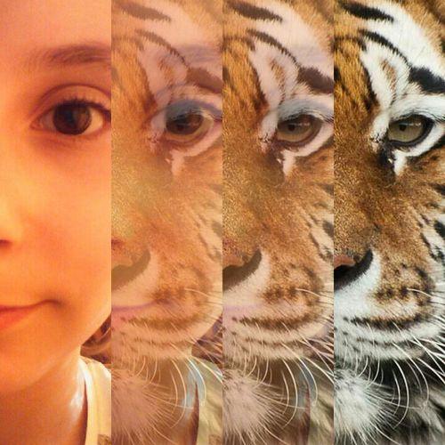 💙💙💙 Tiger Face