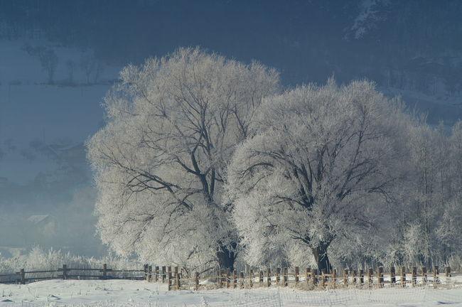 Schweiz Switzerland Wallis Leuk Winter Bäume Trees Zaun Wintertime Winter Wonderland Winter Trees Kalt Cold Cold Temperature Ice Age