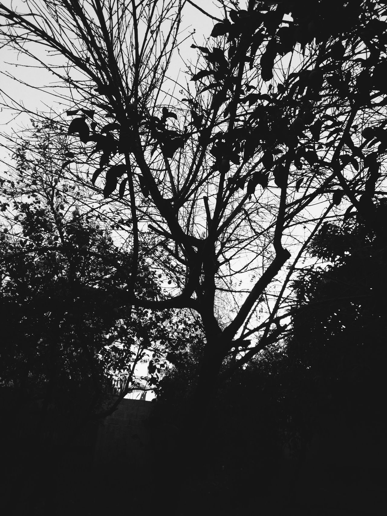 Nature Tree Beauty In Nature Sky No People Black And White Depression - Sadness Aloneinthedark Taking Photos Nice Atmosphere Nature Alone Time Hello World Sunlight And Shade Hi! Pain