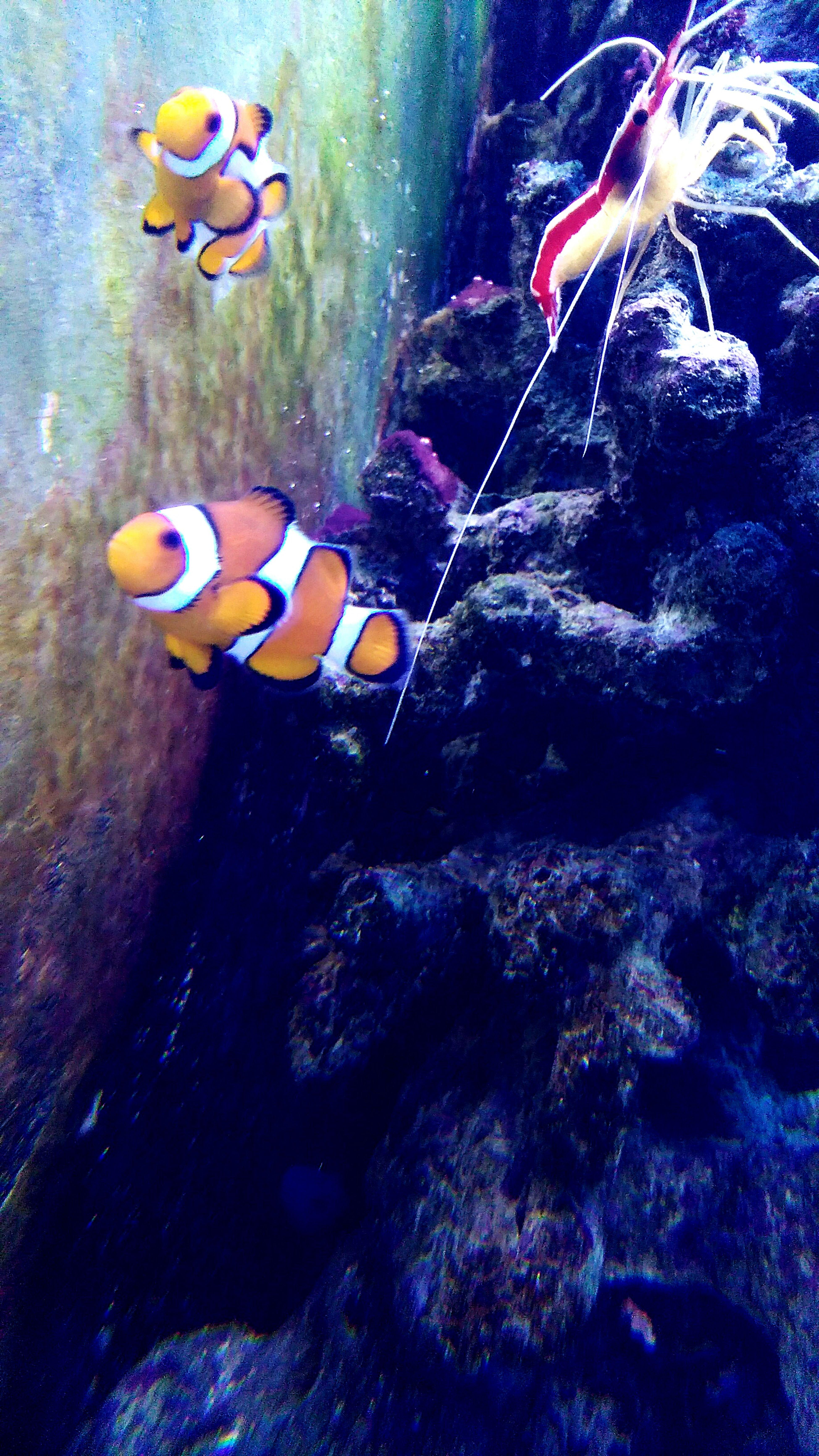 Fish Fishes Orange Nemo :) Akwarium EyeEm Best Shots Eyeem Nature Water First Eyeem Photo