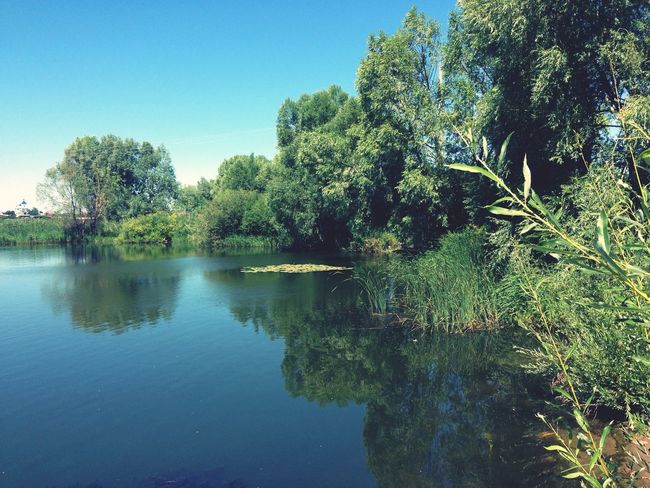 Summer ☀ Nature