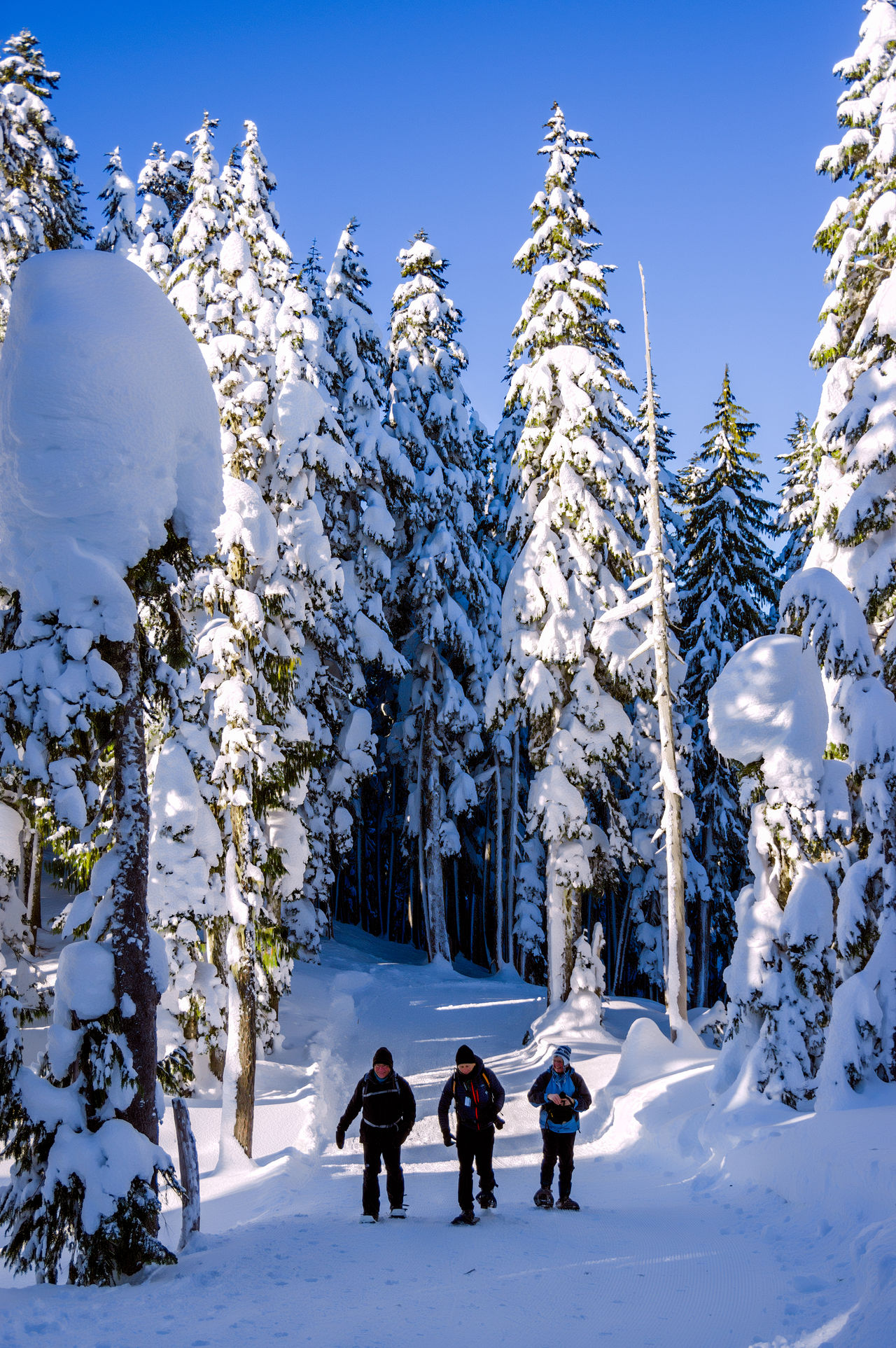 Adults Only Blue Sky Paradise Meadows People Powder Snow Snow Snowshoeing Trees And Sky