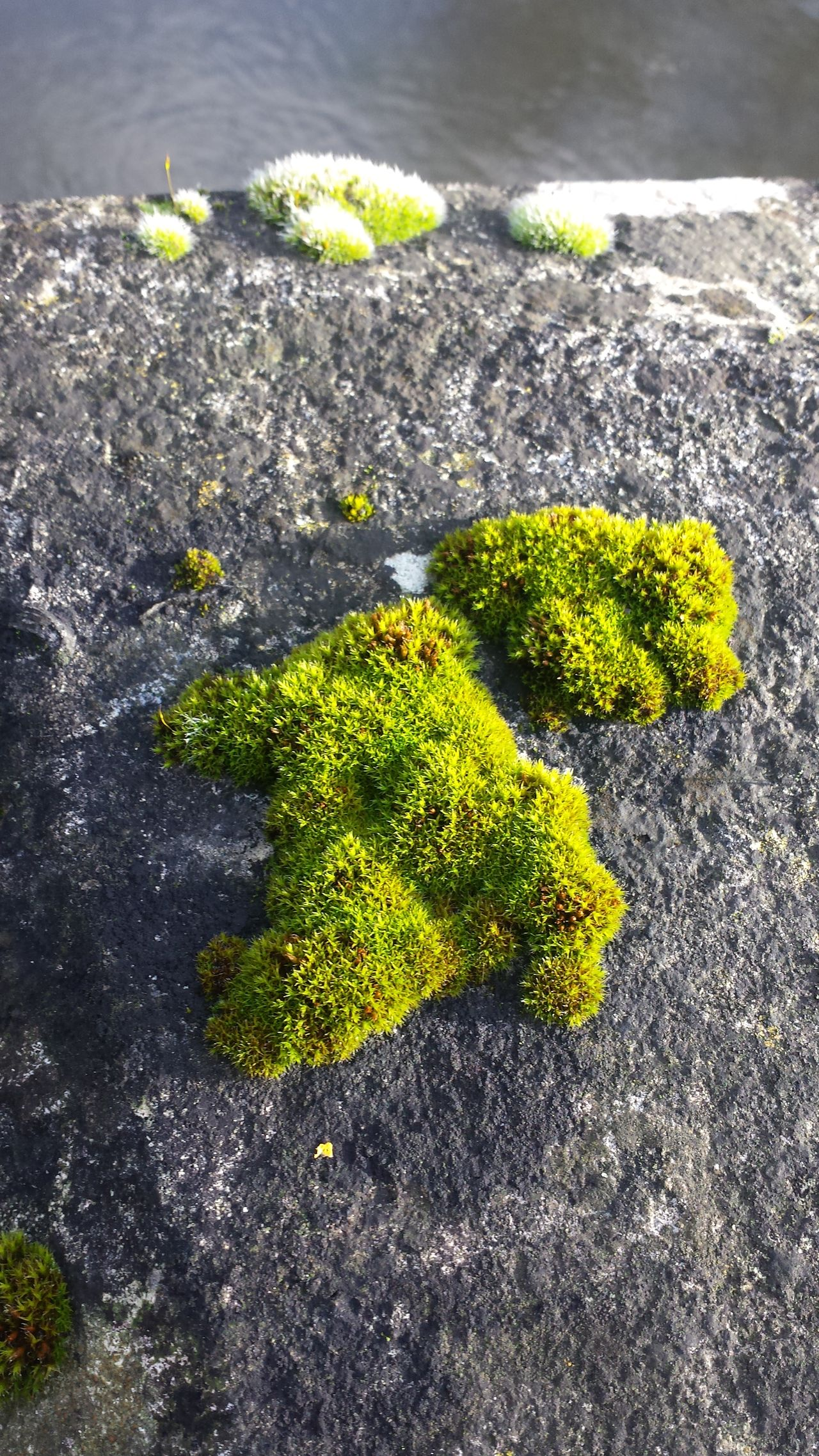 Moss Close-up Nature Green Color Beauty In Nature No People Mossy Stone Yellow English Moss