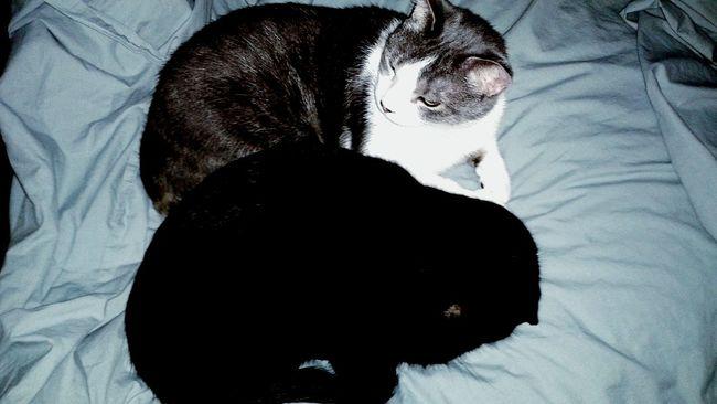 My Boys. Cute Cats Kitty Cats  Taking Photos Relaxing I Love My Animals! Cuddling Kitties! :-)