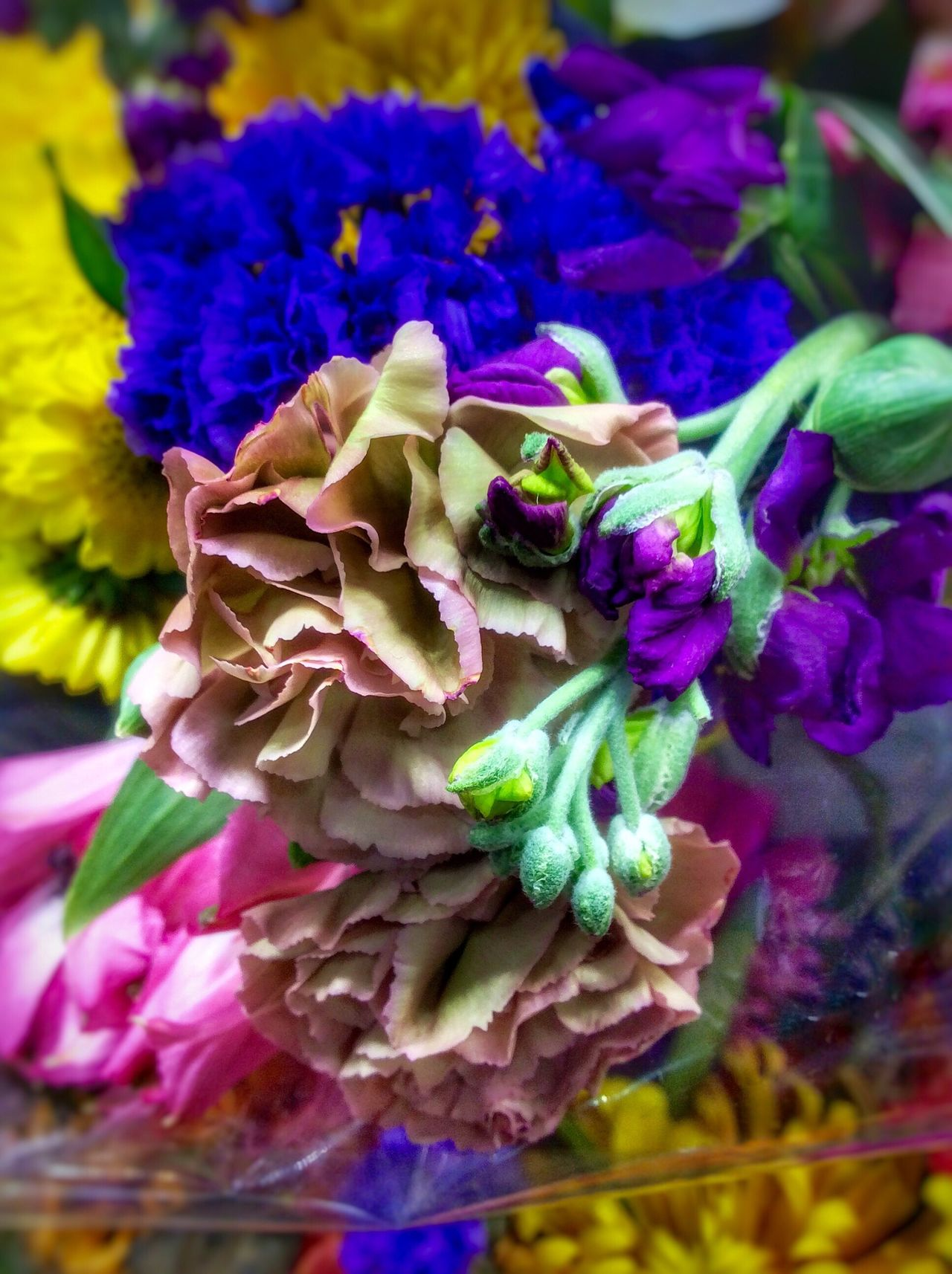 Droopy, dying, colorful flowers for sale. Droopy Droopy Flowers EyeEmNewHere Artiseverywhere Multi Colored Fragility Petal Beauty In Nature Freshness Nature Growth Flower Head Plant Purple Close-up Day No People Fresh Cut Flowers Bouquet