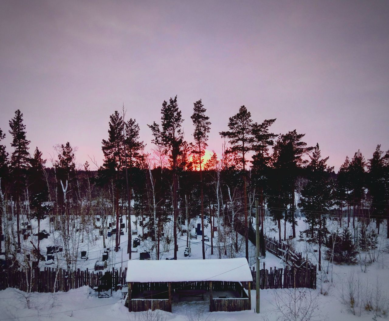 Костанай Kostanai Kostanay Kostanayfoto Kostanay City Лес Природа Зимний лес зимнийзакат Закат закатзимой Forest Wood Winter Sunset Wintersunset Sunsetwinters