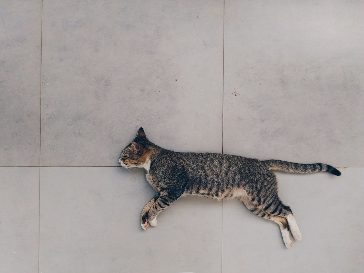 Cat Thailand Buriram  Noteo.m.g. Photo Cat